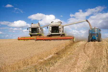 wheat harvest: Combines harvesting wheat and filling trailer in sunny, rural field LANG_EVOIMAGES