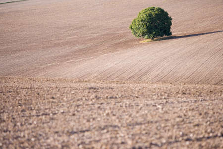ploughed: Tree in sunny, ploughed field LANG_EVOIMAGES
