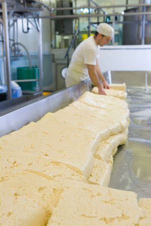 cheddar: Cheese maker turning farmhouse cheddar curds LANG_EVOIMAGES