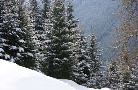 hillside: Remote snowy hillside with forest in background LANG_EVOIMAGES