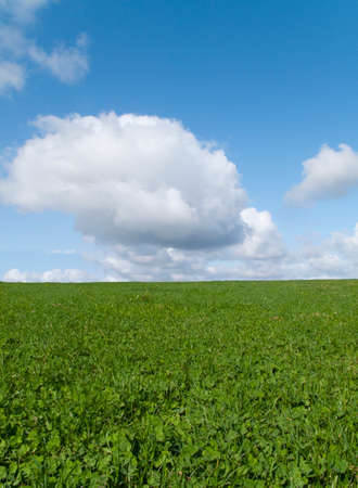 meadow  grass: Meadow grass growing in field under blue sky LANG_EVOIMAGES
