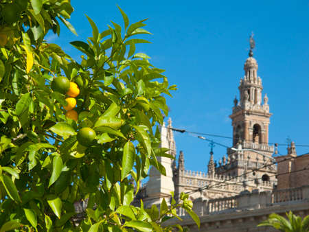 citrus tree: Citrus tree and ornate cathedral, Seville, Spain