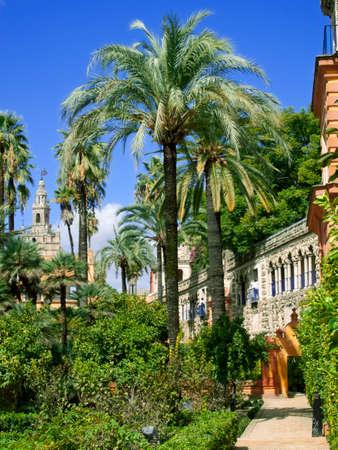 alcazar: Palm trees and walkway, Alcazar, Seville, Spain