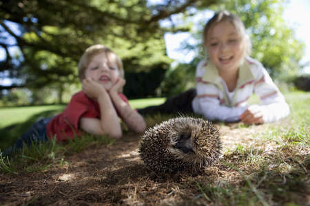 omnivores: Boy (4-6) and girl (7-9) lying on grass in garden, watching hedgehog, smiling, surface level, focus on foreground (tilt) LANG_EVOIMAGES