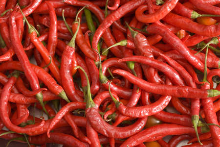 heats: Large group of red chilli peppers, close-up (full frame, still life) LANG_EVOIMAGES
