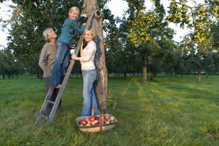 three generations of women: Family of three generations of women picking apples, smiling, portrait