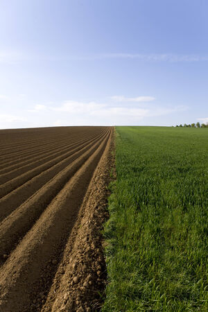 ploughed: Ploughed field next to young wheat field
