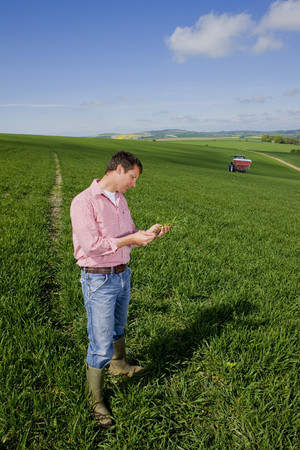 fertilizing: Farmer examining young wheat crop with fertilizing tractor in background