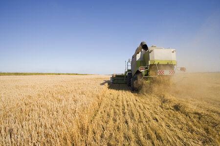Tractor harvesting barley Reklamní fotografie
