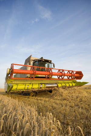 cosechadora: Combinar la cosecha de trigo