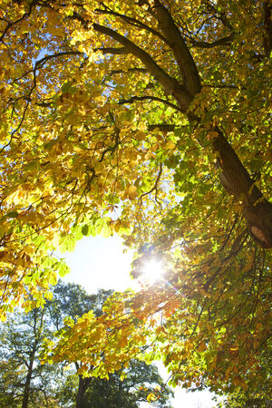 tetbury: Sun shining through tree covered in autumn leaves
