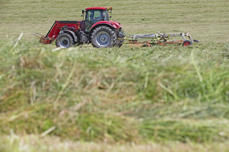 cut the grass: Tractor turning cut grass to dry for hay