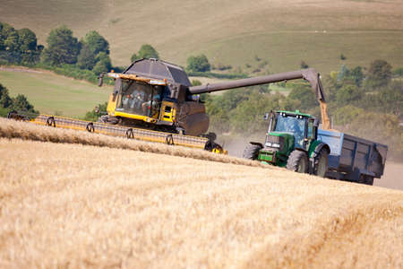 alongside: Combine harvester,harvesting wheat into trailer pulled alongside by tractor,in sunny rural field LANG_EVOIMAGES