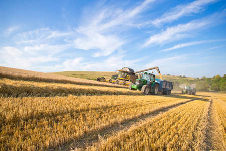 Combine harvester,harvesting wheat into trailer pulled alongside by tractor,in sunny rural field LANG_EVOIMAGES