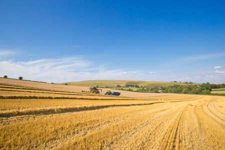 Combine harvester with tractor and trailer,harvesting wheat,in sunny rural field LANG_EVOIMAGES