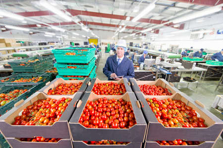 grower: Quality control worker with digital tablet inspecting ripe red vine tomatoes in boxes in food processing plant LANG_EVOIMAGES