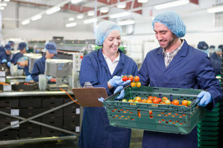 grower: Quality control workers inspecting ripe vine tomatoes in crate in food processing plant