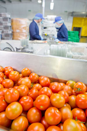 grower: Ripe red tomatoes in bin in food processing plant