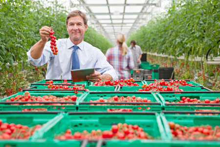 Portrait confident businessman with digital tablet holding ripe red vine tomatoes in greenhouse