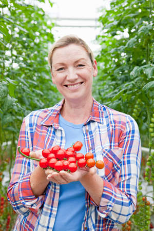 grower: Portrait smiling grower holding ripe red vine tomatoes in greenhouse