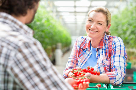 growers: Growers talking and inspecting ripe red vine tomatoes in greenhouse LANG_EVOIMAGES