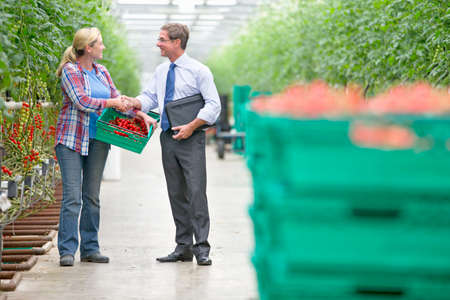 Businessman and grower with crate of ripe tomatoes handshaking in greenhouse Stock Photo