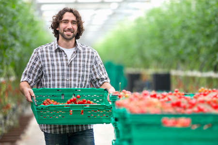 people: Portrait of grower carrying crate of ripe tomatoes in greenhouse