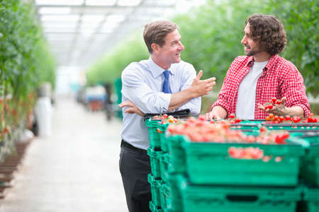 Businessman and grower discussing ripe tomatoes in crates in greenhouse Stock Photo