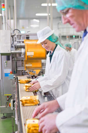 Workers stacking cheese on production line in processing plant