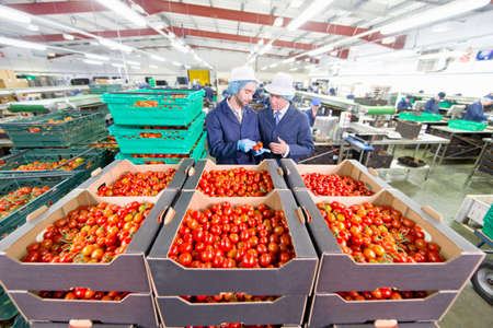 grower: Quality control workers inspecting ripe red vine tomatoes in boxes in food processing plant
