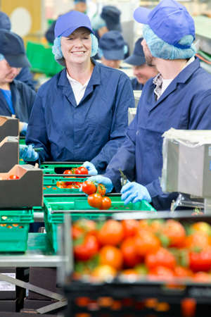 grower: Smiling workers talking and packing tomatoes in food processing plant LANG_EVOIMAGES