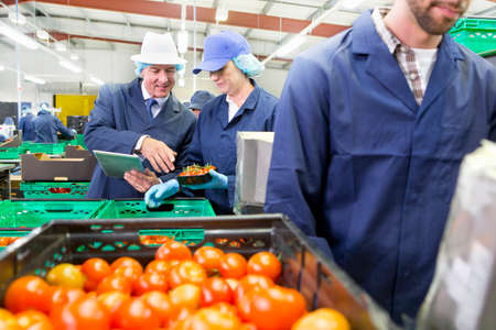 grower: Quality control workers inspecting and packing ripe red tomatoes in food processing plant