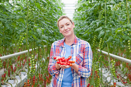 Portrait smiling grower holding ripe red vine tomatoes in greenhouse
