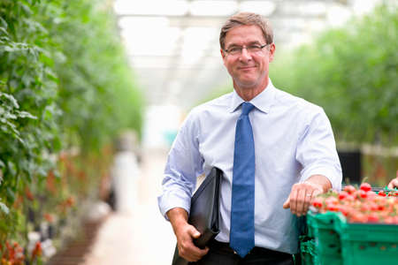 Portrait confident businessman at crate of ripe tomatoes in greenhouse Stock Photo