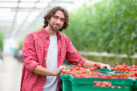 Portrait confident grower with crates of ripe red tomatoes in greenhouse