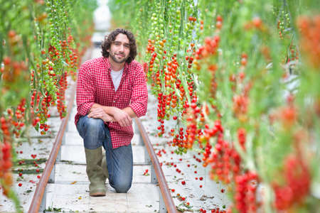 Portrait confident worker between rows of vine tomato plants in greenhouse Stock Photo