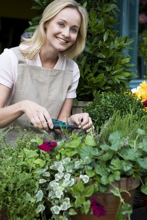 Woman florist or gardener tending to pot plants, pruning and shaping