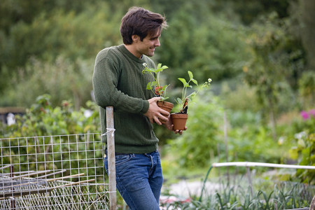 A young man on an allotment, holding strawberry plants Stock Photo