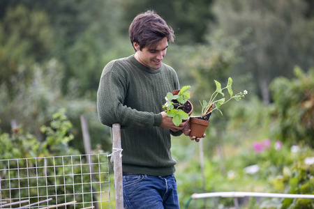 self sufficient: A young man on an allotment, holding strawberry plants LANG_EVOIMAGES