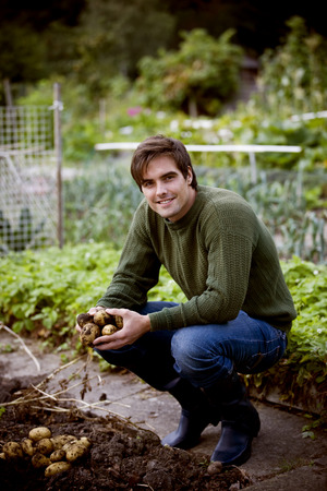self sufficient: A man gathering potatoes from the soil on an allotment LANG_EVOIMAGES