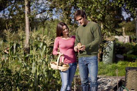 self sufficient: A young couple holding a trug full of potatoes on an allotment