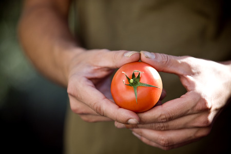 self sufficient: A man holding a tomato, close-up