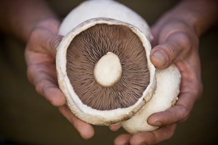 cupped: A man holding mushrooms, close-up LANG_EVOIMAGES