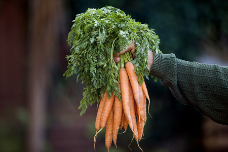 self sufficient: A man holding a bunch of carrots