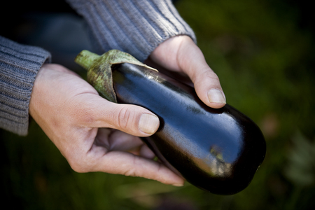 self sufficient: A man holding an aubergine, close-up LANG_EVOIMAGES