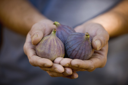self sufficient: A man holding figs, close-up LANG_EVOIMAGES