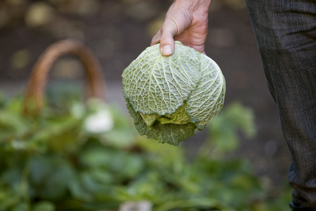 self sufficient: A man holding a cabbage