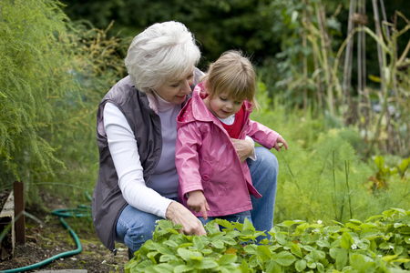 self sufficient: A grandmother and her granddaughter looking at strawberry plants