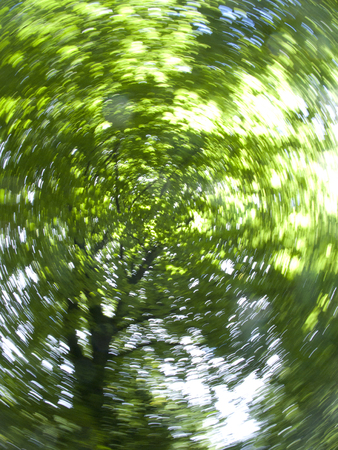 Low angle view looking up through spinning branches of tree