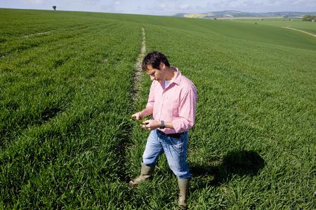 Farmer examining young wheat crop in farm field Stock Photo